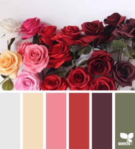 Paper Roses Color Design Seeds